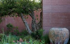 Sarah Price's 2018 Chelsea Garden: the twisted cork oak