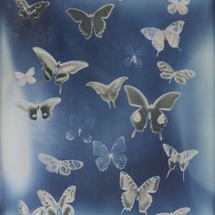 Find images and videos about blue, aesthetic and butterfly on We Heart It - the app to get lost in what you love. Aesthetic Backgrounds, Photo Backgrounds, Aesthetic Wallpapers, Photo Wall Collage, Picture Wall, Collage Art, Japon Illustration, Pics Art, Grafik Design