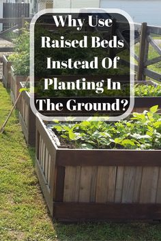 """This is a question I received from a reader recently after I posted a picture of the raised beds I was building on Facebook. He wanted to know """"why would you go through all the trouble of bui…"""