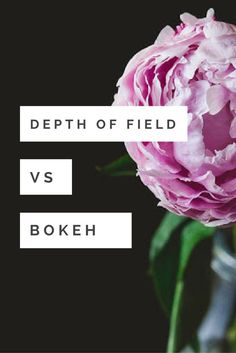 Looking for tips to get beautiful Bokeh in your photography? Check out this tutorial on three ways depth of field can help you achieve beautiful bokeh