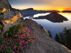 crater lake national park Sunrise and penstemon. Crater Lake National Park, Oregon Sunrise and penstemon. Crater Lake Oregon, Crater Lake National Park, National Parks, Monuments, Oregon Travel, Belle Photo, Pacific Northwest, Places To See, Gardens