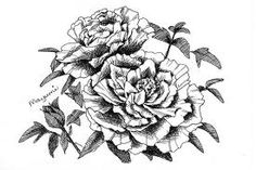 japanese peony line drawing - Google Search