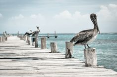 Shop CHILLING (pelican design) ~ Poster created by TheWhippingPost. Personalize it with photos & text or purchase as is! Cozumel, Free Stock Photos, Free Photos, Free High Resolution Photos, Fish Wallpaper, Sea Photo, 6 Photos, Public Domain, Seaside