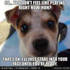 Hey... you ready yet? How about now? Or now? #dogs #funny