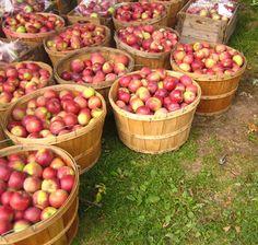 Paniers de pommes - Flickr - luce_beaulieu