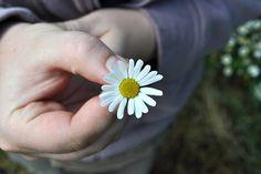 Flower, Hand, Daisy, Gift, Romantic