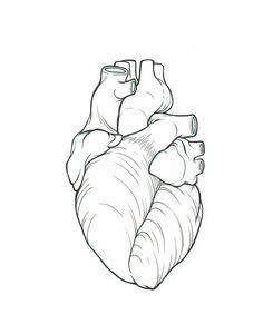 Anatomically correct heart line art