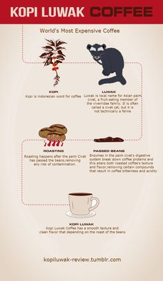 Free Infographic Submission Site: http://infographicplace.com/  Infographic: Making of Kopi luwak Coffee . If you're a coffee-addicted, then individuals many different types of coffee must have been attempted in your own life.