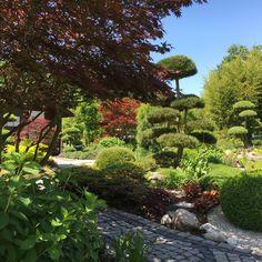 Blick zum Teehaus unter altem japanischen Ahorn mit Garenbonsai Kiefer