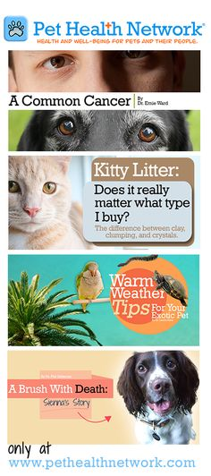 visit the #Pet #Health #Network. Health and well -being for pets and their people.