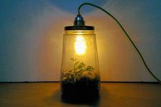 Met een lamp van glazen pot, een deksel en een plantje maak je in een handomdraai een mini-ecosysteem voor in huis. Laura vertelt je hoe dat moet.