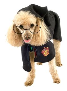 17 Dogs that Love Harry Potter More Than You | Her Campus