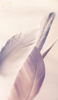 Just some beautiful feathers, a bit light and that's it. I really enjoy exploring these macro worlds -------. Phone Backgrounds, Wallpaper Backgrounds, Iphone Wallpaper, Fotografia Macro, White Aesthetic, Flower Wallpaper, Pretty Pictures, Cute Wallpapers, Aesthetic Wallpapers