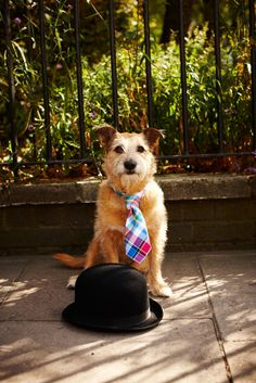 Sadly Charles Tyrwhitt don't do ties for dogs but if they did.....