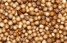 Koriander eignet sich sehr gut für Fleischgerichte z. B. Wild, Lamm, Schwein und Geflügel, für Fisch, Gemüse und für Suppen.  Koriander harmoniert gut mit Ingwer, Kümmel, Kreuzkümmel, Knoblauch, Nelken, Basilikum, Kurkuma, Paprika, Chili, Wacholder und Bockshornklee.