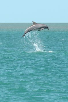 I wanna see them!!! Would love to watch the dolphins and even swim with them!!