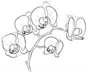 How to draw an orchid Drawing tutorial