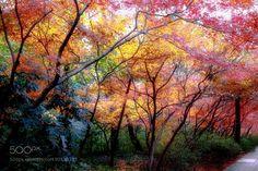 colorful season by yfunei #nature #mothernature #travel #traveling #vacation #visiting #trip #holiday #tourism #tourist #photooftheday #amazing #picoftheday