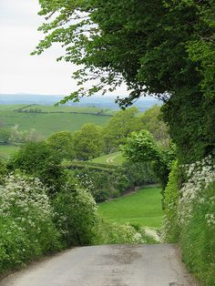 A favourite time with all the Cow Parsley out!