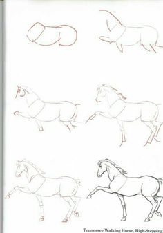 Marvelous Drawing Animals In The Zoo Ideas. Inconceivable Drawing Animals In The Zoo Ideas. Horse Drawings, 3d Drawings, Animal Drawings, Drawing Sketches, Drawing Animals, Horse Sketch, Animal Sketches, Equine Art, Horse Art