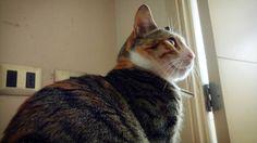 Why so serious? #gato #cat #LasAventurasDeMinerva