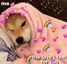 Cute Animal Memes, Cute Animals, Dressage, Wholesome Pictures, Heart Meme, Education Canine, Love You Images, Cute Love Memes, Comedy Memes