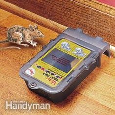 How to Keep Mice Away & Have a Mouse Free House Getting Rid Of Raccoons, Get Rid Of Squirrels, Getting Rid Of Mice, Killing Mice, Keep Mice Away, Types Of Insects, Cat Watch, Pest Management, Garden Guide