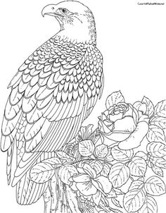 868bc3796350d715e601c80071b35c6f  bald eagle colouring pages together with detailed coloring pages for adults coloring pages animals on eagle mandala coloring pages as well as coloring pages eagle on eagle mandala coloring pages further printable coloring page monkey head animal coloring pages on eagle mandala coloring pages furthermore the eagle mandala coloring pages wood burning projects and on eagle mandala coloring pages