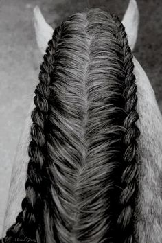 Double mane braid horse, for those extra thick manes! The running braid isn't one that should be done the night before, because if you do it well enough where the braid is tight against the horse's neck she can't lower her head.
