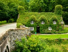 Ivy covered cottage house tearoom known as Ty Hwnt i'r Bont on the River