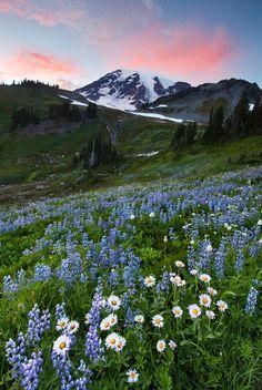 Landscape #mountains #flowers #hills