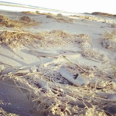 Plaża w słońcu #Wydmy #Zdrowotel #Łeba