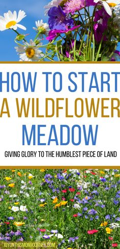 These are the helpful steps that you need to do in order to convert that dull lawn or traditional garden into a more exciting and vibrant wildflower meadow.