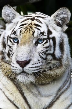 Beautiful crystal blue eyes like Jared Leto :P