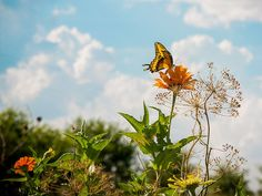 Texas farmer closes out summer garden with an ode to the butterfly
