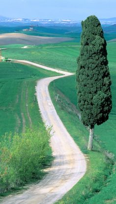 Country road in Tuscany, Italy • photo: Bruno Morandi on Corbis Images
