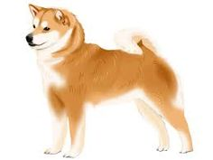 Image result for 柴犬のイラスト