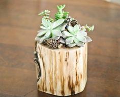 DIY Planter Of A Fallen Tree Piece