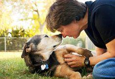 ensaio emocionante com cachorro - Pesquisa Google