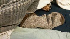 Sock elephant dog