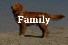 FindTheBest Family