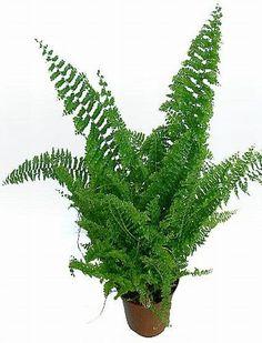 Potted Plants, Cactus Plants, Indoor Plants, Ferns, Shades Of Green, Houseplants, Garden, Flowers, Pot Plants