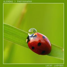ladybugs - Google Search