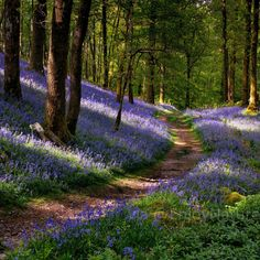 Bluebells at Lake District, Cumbria, England. Lake District, Wonderful Places, Beautiful Places, Landscape Photography, Nature Photography, England Countryside, Parcs, Lake Life, Amazing Nature