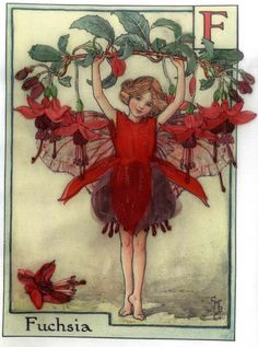 Sheer Inspiration: A. Embroidered Designs » A. Flower Fairies » The Fuchsia Fairy