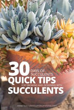 Such a great way to learn about succulents, little by little in easy to digest tips!