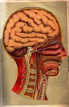 Another look at the inside of the #brain and the structures of the #head. #chiari