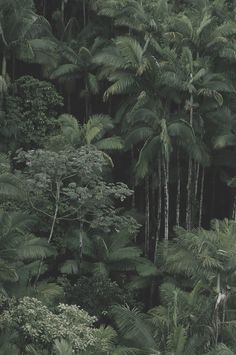 Tropical Rainforest in Borneo, Indonesia Tropical Forest, Tropical Paradise, Tropical Plants, Mother Earth, Mother Nature, Tree Forest, Dark Forest, Parcs, Green Life