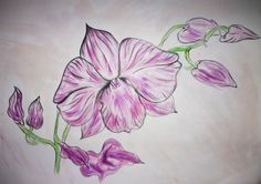 Floral studies by Lynda Conway, via Behance Textile Design, My Design, Behance, Textiles, Study, Tattoos, Floral, Artwork, Flowers