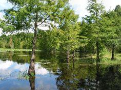 Lake Lindsey Cypress, Brooksville ... JhC